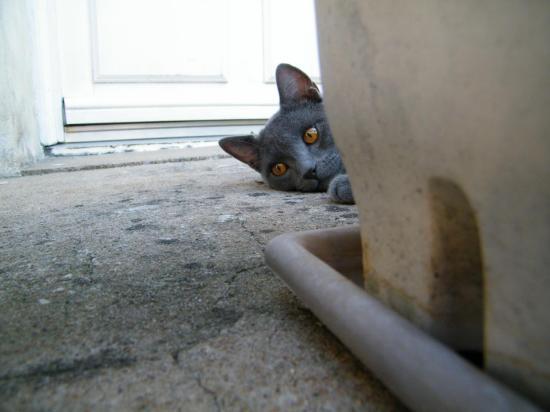 Milo 10 mois joue à cache cache