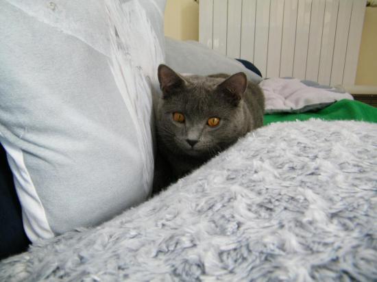 Milo 6 mois en cache cache coussin !